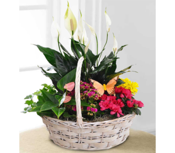 Blooming Garden Basket in Indianapolis IN, George Thomas Florist