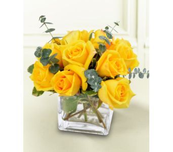 A Dozen Compact Roses in Indianapolis IN, George Thomas Florist