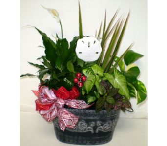 Everlasting Christmas Planter in Falmouth MA, Falmouth Florist 508-540-2020