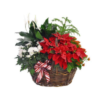 Blooming Poinsettia Planter Basket in Ferndale MI, Blumz...by JRDesigns