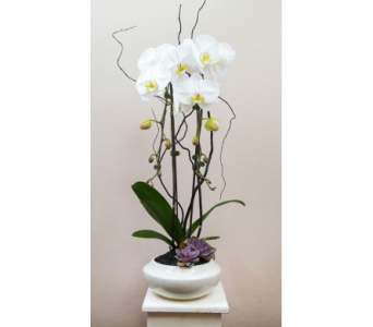 Elegant Orchid White in Lewisville TX, D.J. Flowers & Gifts