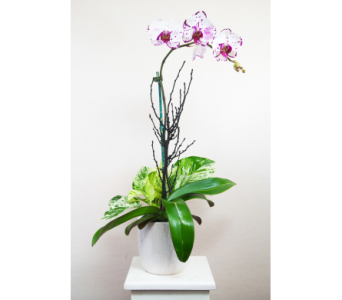 Elegant Orchid Lavender in Lewisville TX, D.J. Flowers & Gifts