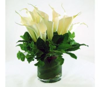 Calla Lily Excellence in Kissimmee FL, Golden Carriage Florist