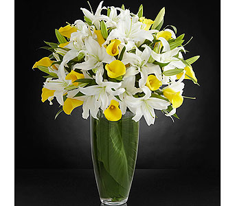 Vivacious Luxury Lily in Baltimore MD, Raimondi's Flowers & Fruit Baskets