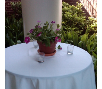 Potted Petunia Centerpiece in Cary NC, Cary Florist