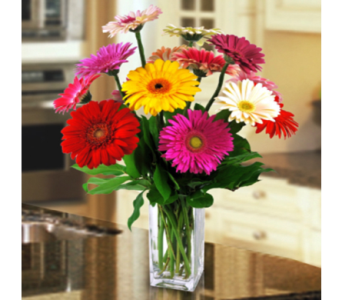 Great Gerberas in Indianapolis IN, George Thomas Florist