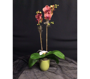 Gorgeous Phalaenopsis Orchid Plant in Oakland CA, J. Miller Flowers and Gifts