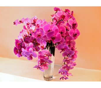 Pink Phalaenopsis Orchid Arrangement in San Francisco CA, Fillmore Florist