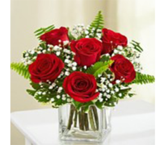 6 Compact Roses in Indianapolis IN, George Thomas Florist