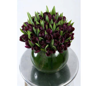 purple tulip bowl   in Bellevue WA, CITY FLOWERS, INC.