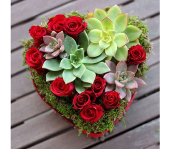 Desert Heart in Bellevue WA, CITY FLOWERS, INC.
