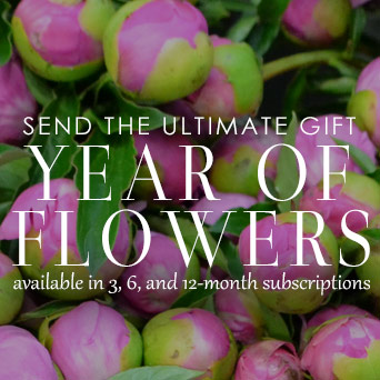 Year of Flowers Monthly Subscription in Dallas TX, Dr Delphinium Designs & Events