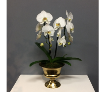 Double Cascade in Gold in Thornhill ON, Orchid Florist