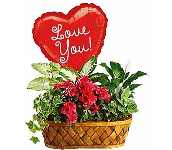 Plants Galore- W-ILY Mylar by 1-800-balloons