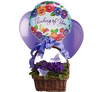 Violets And Butterflies w/Balloon in 1-800 Balloons NV, 1-800 Balloons