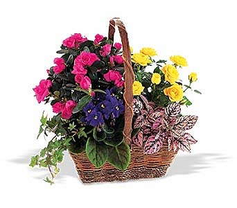 Blooming Garden Basket in 1-800 Balloons NV, 1-800 Balloons