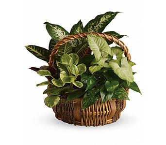 Emerald Garden Basket by 1-800-balloons