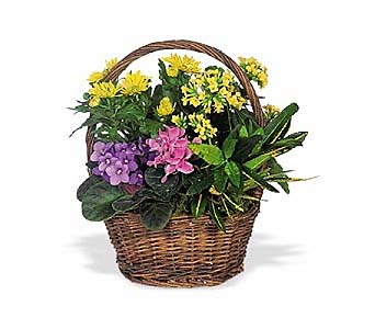 Petite European Basket by 1-800-balloons