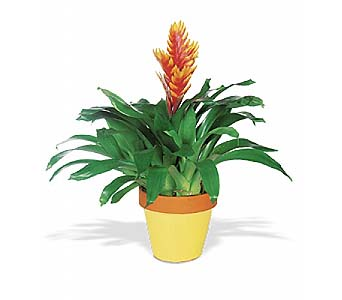 Exotic Bromeliad by 1-800-balloons