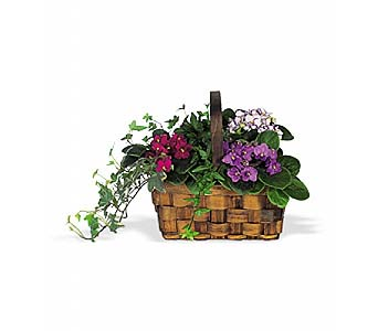 Mixed African Violet Basket by 1-800-balloons