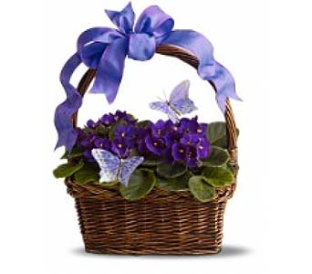 Violets And Butterflies by 1-800-balloons