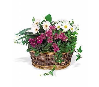 Traditional European Garden Basket in 1-800 Balloons NV, 1-800 Balloons