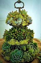 Tiered Succulents in Kentfield CA, Paradise Flowers