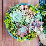 Blue Succulent Bowl in Kentfield CA, Paradise Flowers