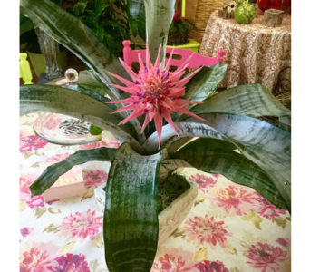 Pink Mink in Vero Beach FL, Artistic First Florist