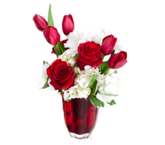 Tulip KIsses in Nashville TN, Emma's Flowers & Gifts, Inc.