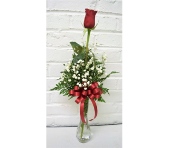Single Red Rose Bud Vase in Springfield MO, House of Flowers Inc.