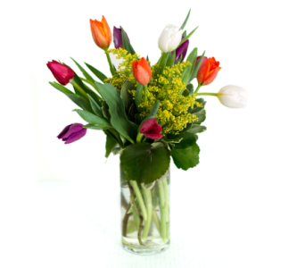 Dozen Tulips in Nashville TN, Emma's Flowers & Gifts, Inc.