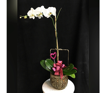 tropical valentine orchid in Wellington FL, Wellington Florist