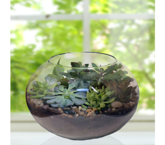 Succulent Terrarium in Indianapolis IN, George Thomas Florist