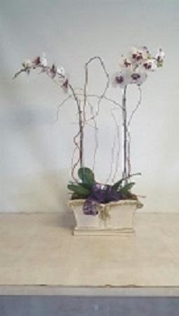 Elegant design of orchid Plants in Plantation FL, Plantation Florist-Floral Promotions, Inc.