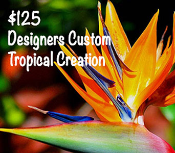 Designers Tropical Creation in Baltimore MD, Raimondi's Flowers & Fruit Baskets