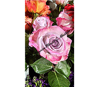Deep Purple Roses in Massapequa Park NY, Bayview Florist & Montage  1-800-800-7304