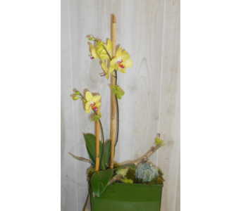 Woodsy Orchid in Dallas TX, Petals & Stems Florist