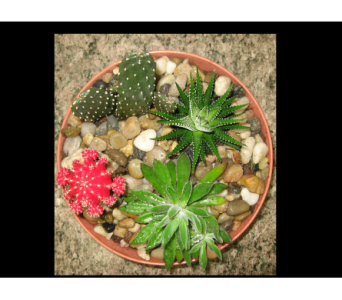 Cacti Garden in Guelph ON, Patti's Flower Boutique