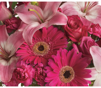Pink Sensation in Flemington NJ, Flemington Floral Co. & Greenhouses, Inc.