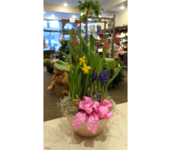 Bucks Bulb Garden in Princeton, Plainsboro, & Trenton NJ, Monday Morning Flower and Balloon Co.