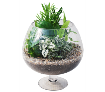 Pedestal Terrarium in Madison WI, Felly's Flowers