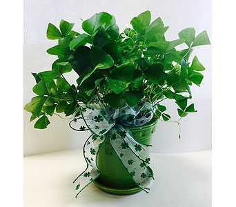 Shamrock in green ceramic pot with ribbon tie in Northfield MN, Forget-Me-Not Florist