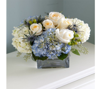Dior Blue in Indianapolis IN, George Thomas Florist