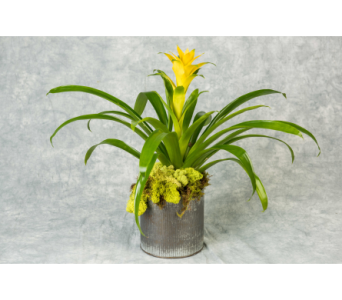 Single Bromeliad Plant   in Great Neck NY, United Floral
