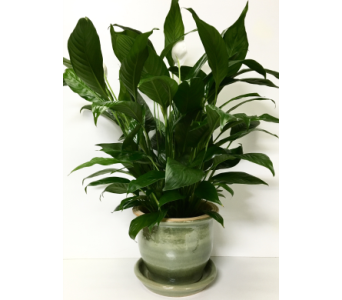 Peace Lily in Green Ceramic - 2 Sizes Available in Wyoming MI, Wyoming Stuyvesant Floral