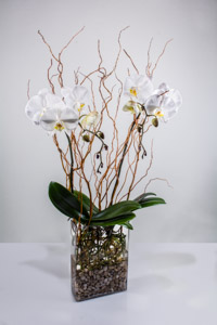 Twin Orchid WillowThis is a