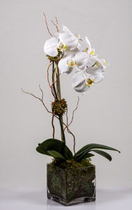 Phalaenopsis-White in New York NY, Starbright Floral Design