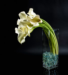 Blanco Calla Tango in New York NY, Starbright Floral Design