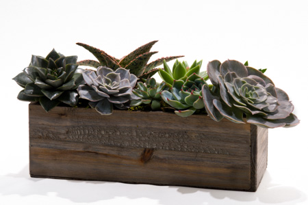 Magic Box of Succulents in New York NY, Starbright Floral Design